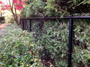 Chain-Link Fence Black Powder-Coated