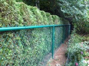 Green Powder-Coated Chain-link Fence