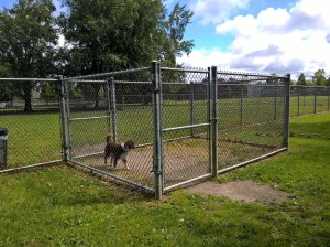 Dog in chain-link Air Lock at an outdoor dog park